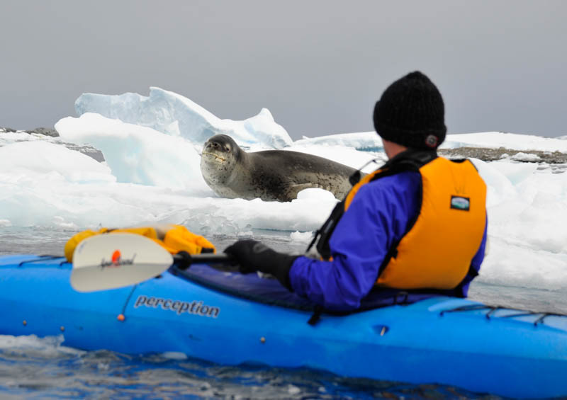 kayak on snow antarctica sea kayaking jan 2009