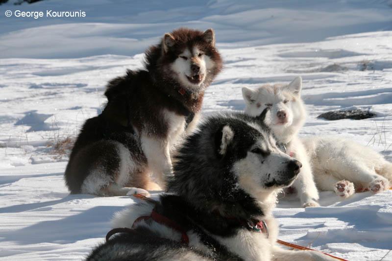 Arctic Polar Training Baffin Island Nunavut