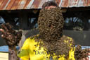 "Wearing a ""Beard of Bees"""